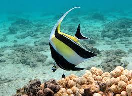 Les poissons coralliens sont stressés par la solitude (étude)