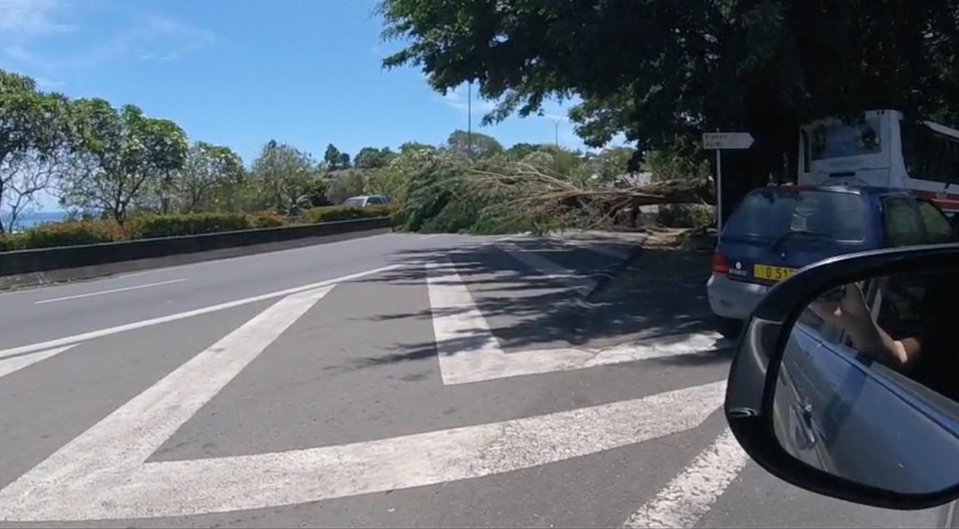 Un arbre bloque une partie de la RDO