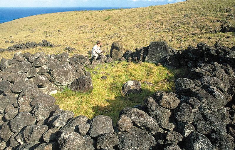 Le vrai ahu Akivi a été totalement rasé et des éleveurs pascuans ont fait un enclos en contrebas du monument avec ses pierres.