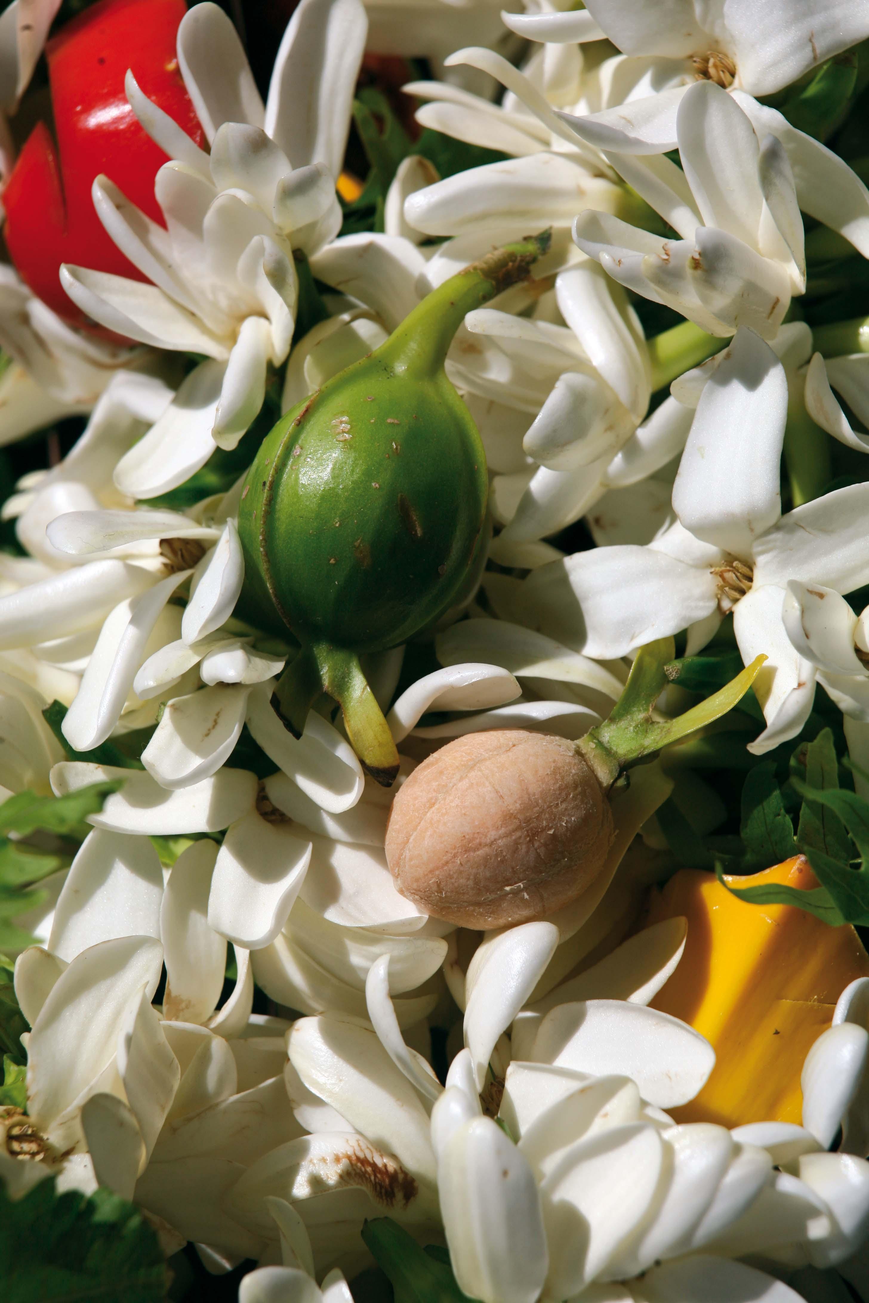 Très rares, des fruits de tiare Tahiti.