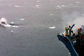 Partisans et adversaires de la chasse à la baleine affichent leur fermeté