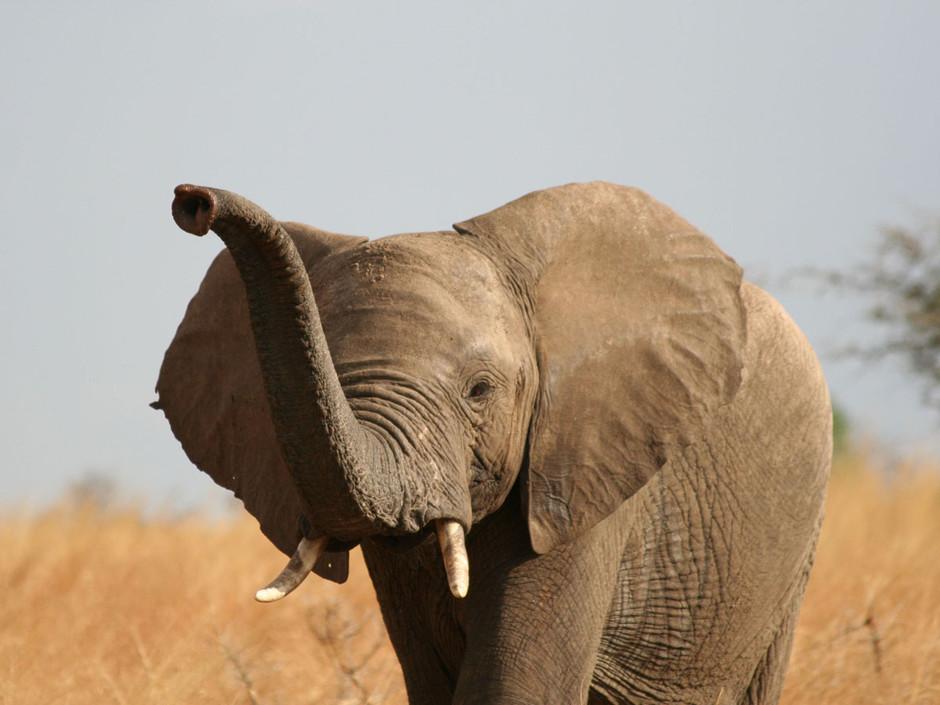 Effondrement de près de 60% des populations de vertébrés en 42 ans (rapport WWF)