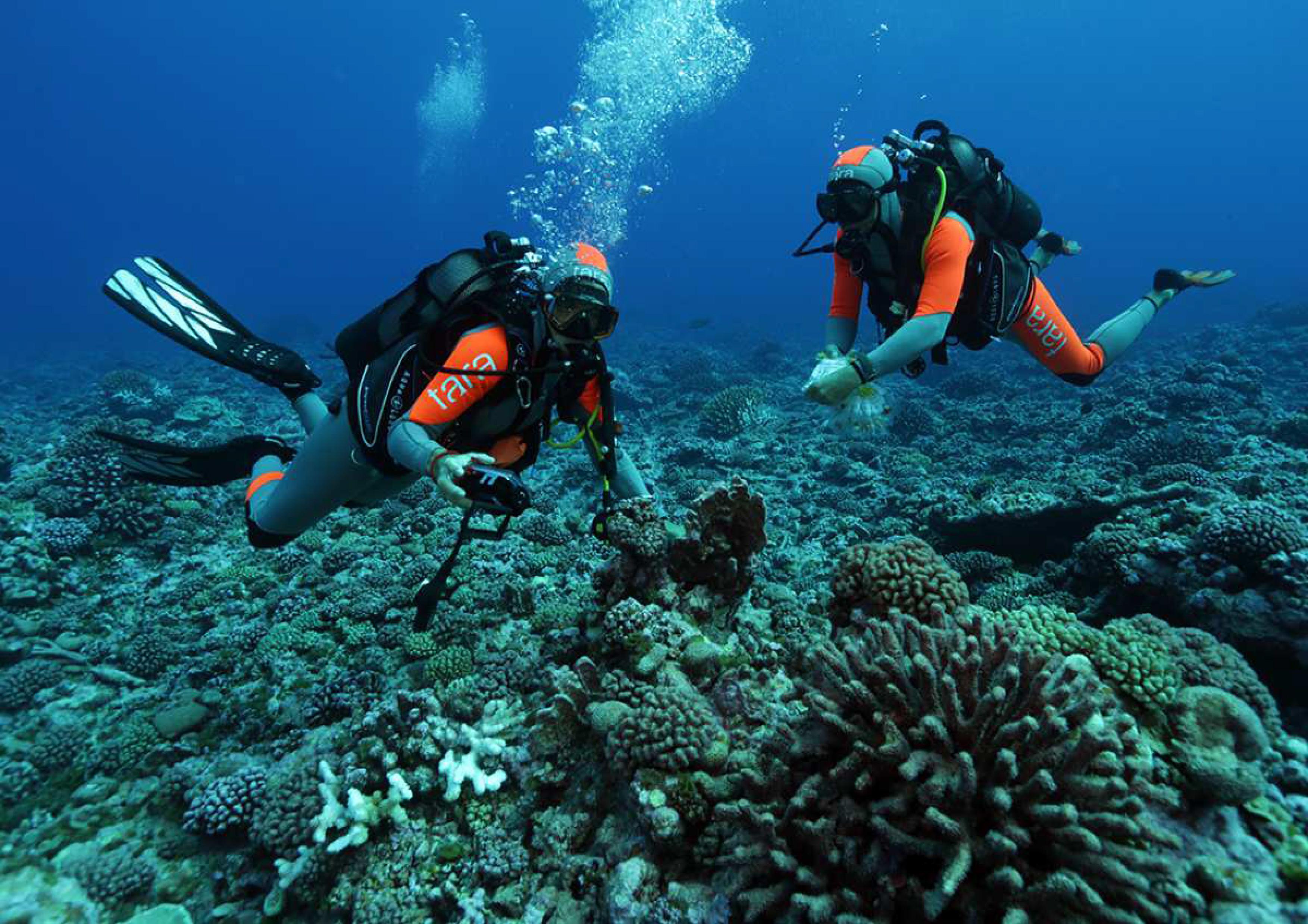 Les Dr. Laetitia Hedouin et David Monmarche, jeunes chercheurs du Criobe seront également décorés pour leur implication dans la recherche en biologie marine.