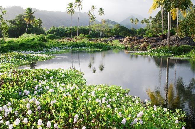 La source Vaiuriri au PK 47,5 à Mataiea. Photo Tahiti Heritage