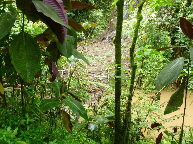 """La photo de l'éboulement dont parle le propriétaire : """"On voit la rivière couleur """"chocolat"""" dont le cours est complètement obstrué par un glissement naturel de plusieurs centaines de m3 de boues mélangées à la végétation. Ce phénomène arrive régulièrement après les grosses pluies."""""""