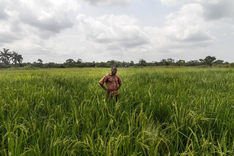 """Les rizières """"intelligentes"""" des paysans béninois"""