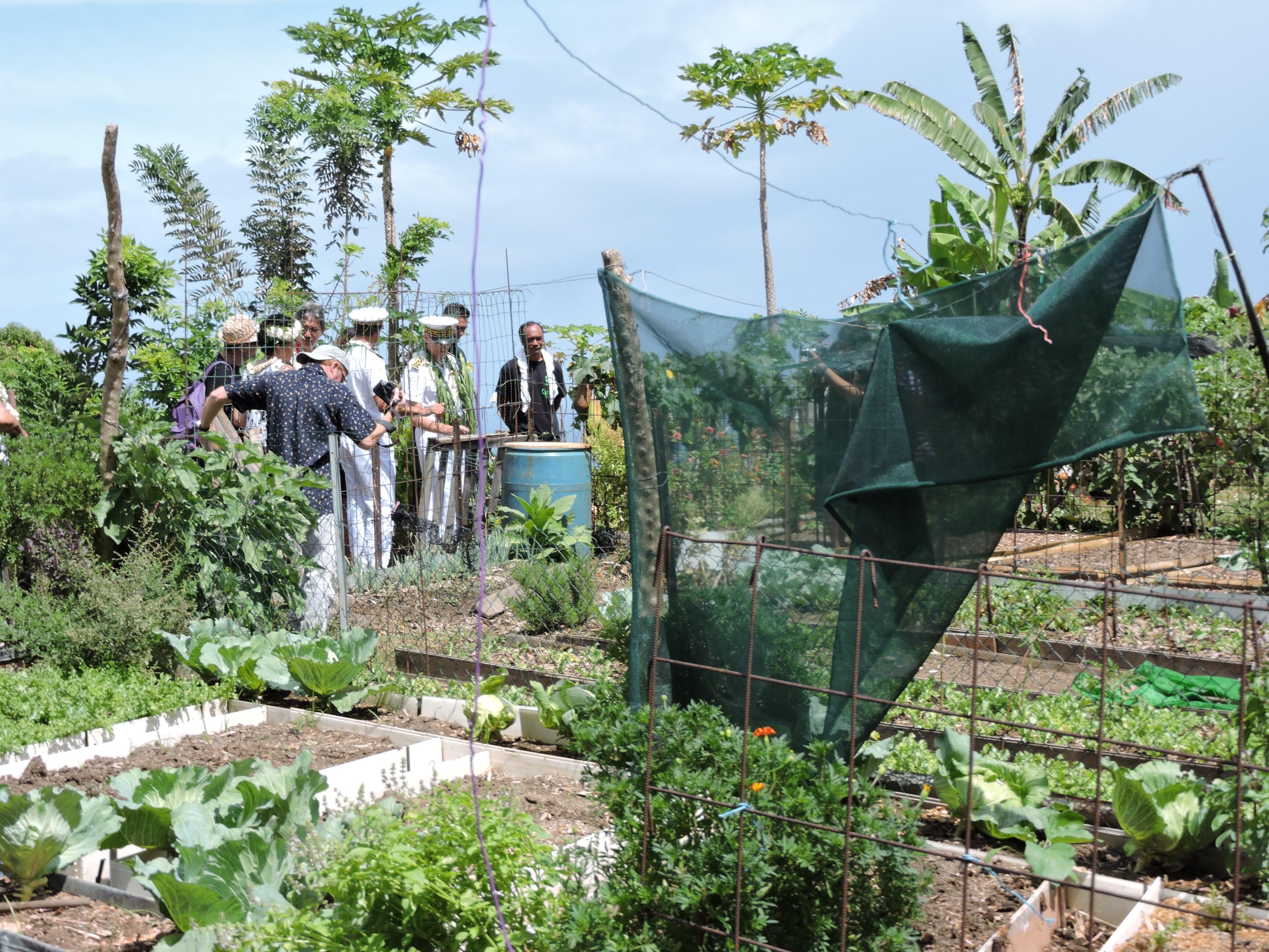 Le jardin partagé situé à côté du CJA de Erima est géré par sept familles. La commune de Arue envisage d'ouvrir un dispositif similaire l'an prochain juste au-dessus du cimetière. Les terrains seront mis à disposition de familles vivant dans les lotissements sociaux.