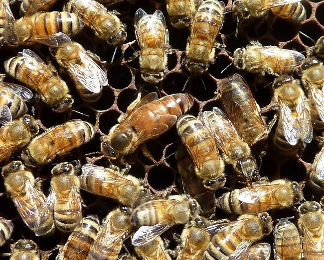 Une étude pour mieux connaître les caractéristiques des miels
