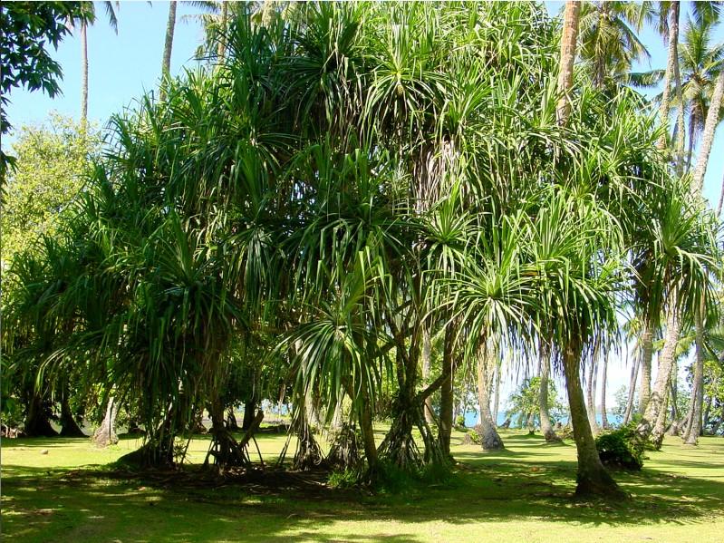 Un petit tour au jardin botanique de papeari for Jardin botanique tours