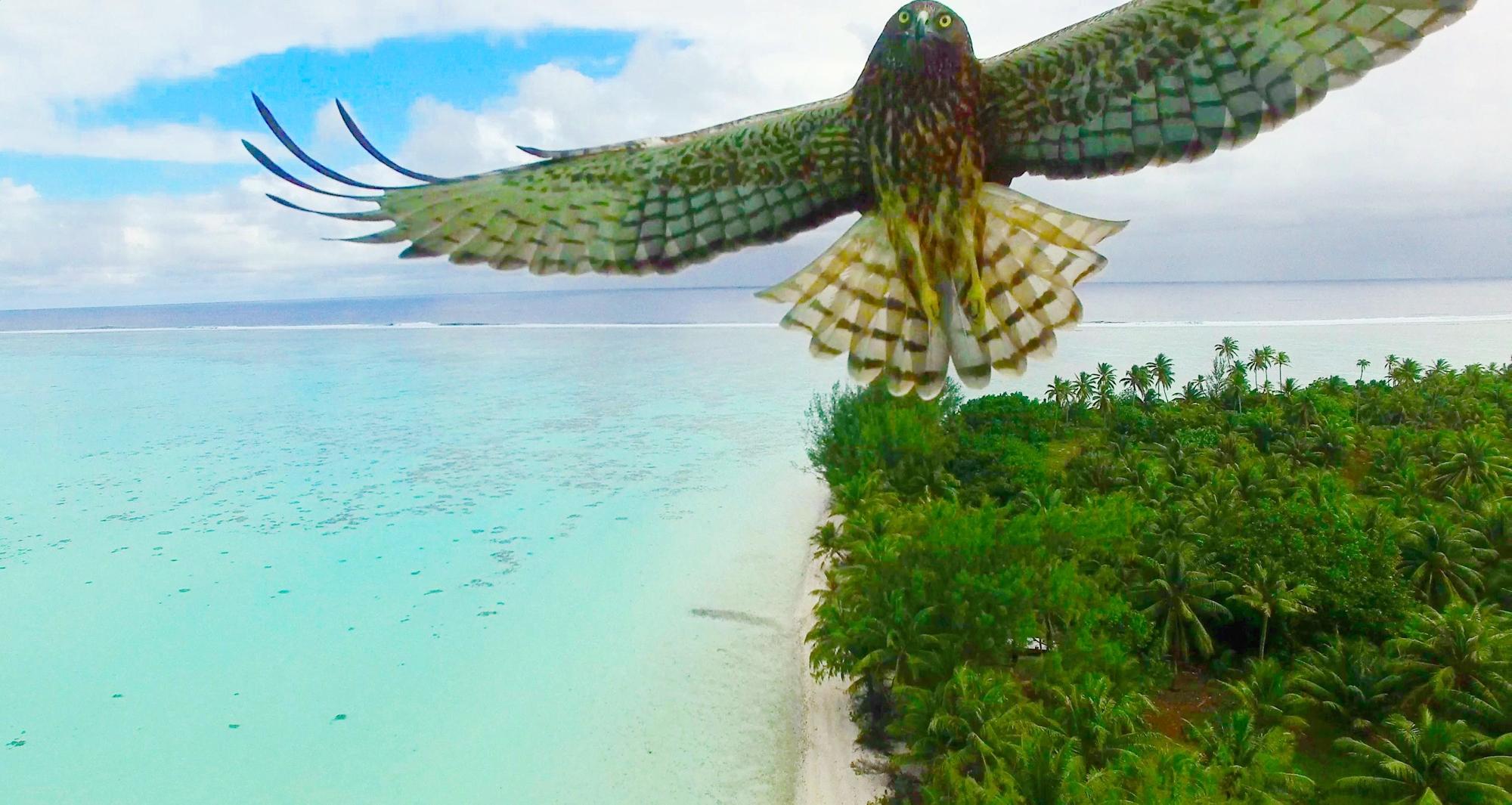 Deux clichés pris en Polynésie dans le top 20 de Dronestagram