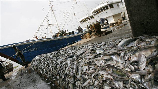especter l'accord de Paris permettrait d'épargner la pêche mondiale