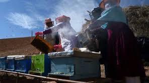 Quand les abeilles donnent du pouvoir aux femmes afghanes