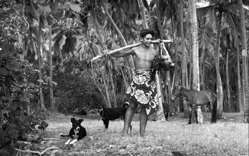 Tahiti, retour de la chasse, vers 1950.