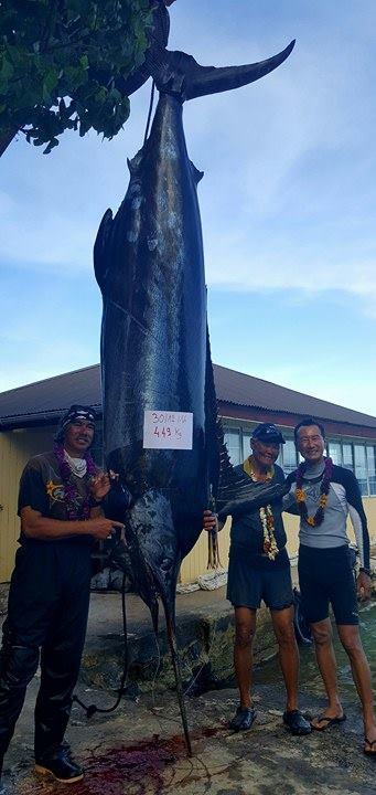 Un haura de 449 kilos pêché à Rikitea