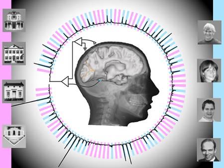 La zone clé du cerveau pour reconnaître les visages grossit jusqu'à l'âge adulte