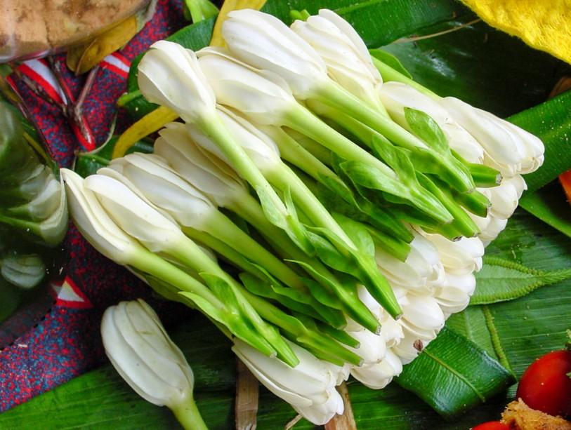 2.Fleurs de tiare Tahiti au doux parfum