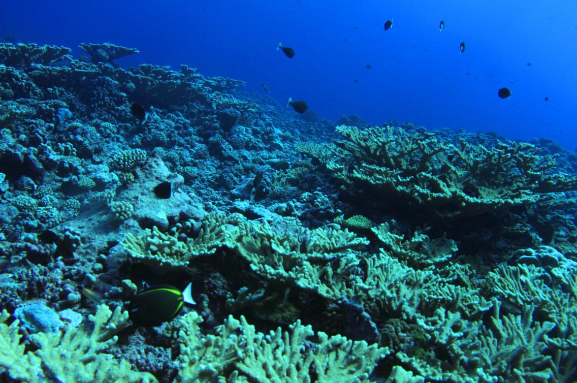 """Plongée """"bouteille"""" ou plongée libre, partout des eaux vierges et riches en faune fixe ou mobile. Les coraux sont particulièrement abondants."""