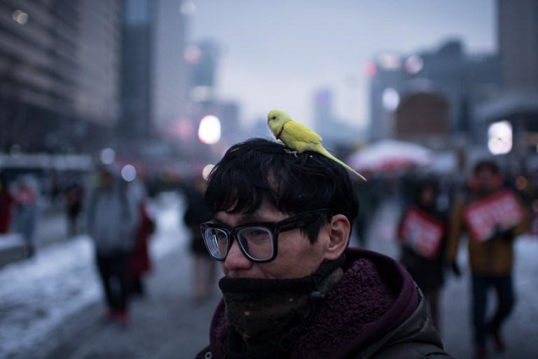 Un homme manifeste le 21 janvier contre le gouvernement à Séoul, un oiseau sur la tête. Photo : Ed JONES / AFP