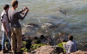 Des dizaines de requins dans des eaux chaudes sur la côte israélienne