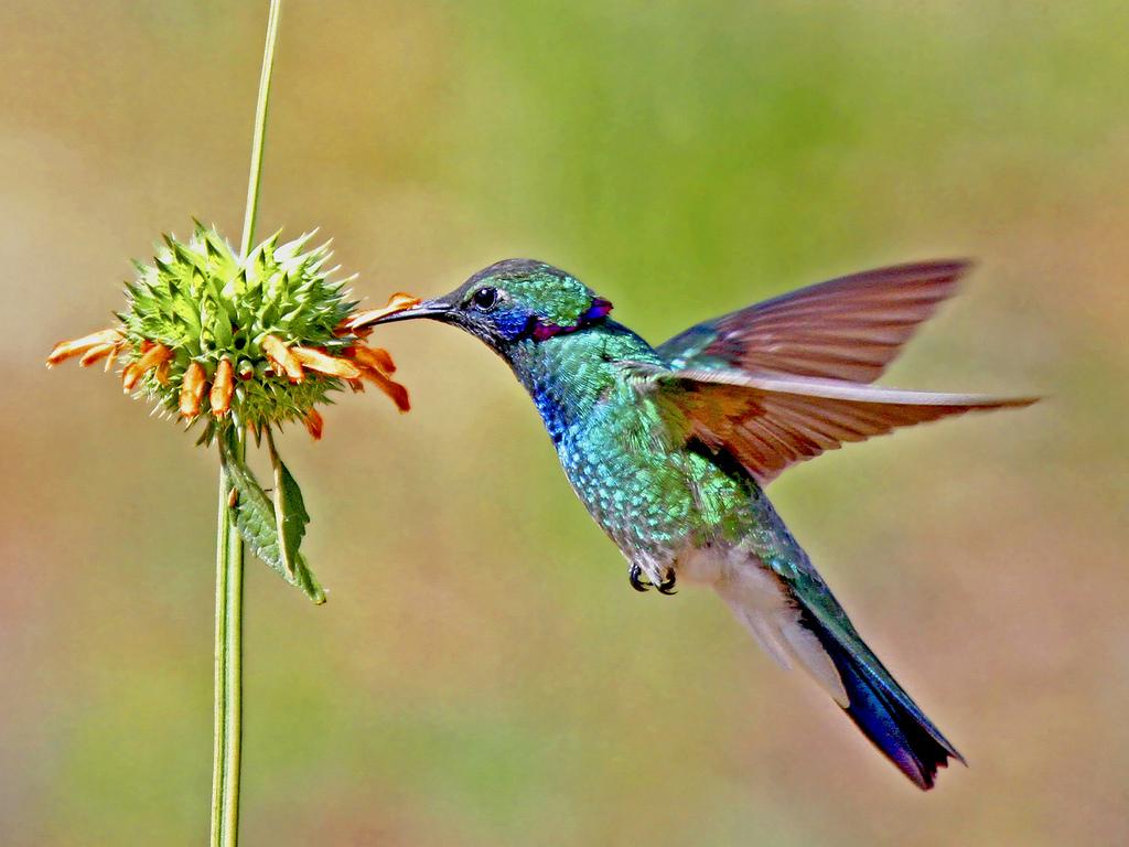 Guyane: un Canadien qui avait capturé et tué 37 oiseaux dont des colibris pour les naturaliser, condamné à 6.000 euros d'amende