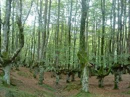 Les parcs naturels s'élèvent contre un projet de décret concernant les forêts protégées