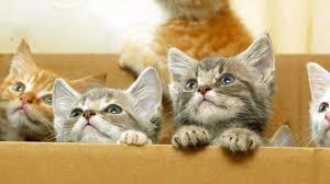 Asphyxiez un chaton, suggère aux élèves un manuel scolaire indien
