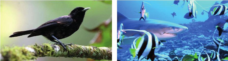"""Biodiversité : des """"petites subventions"""" pour des grands projets"""