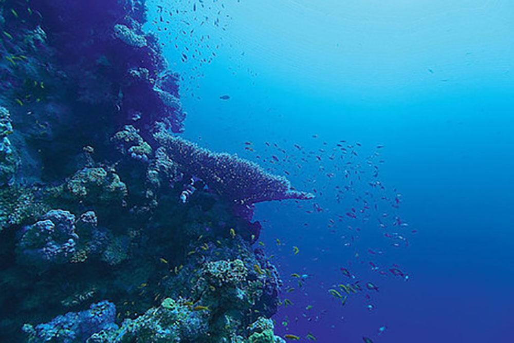 Regain d'intérêt pour l'exploitation minière des grands fonds marins