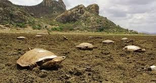 Brésil : quand un lac artificiel devient un cimetière de tortues