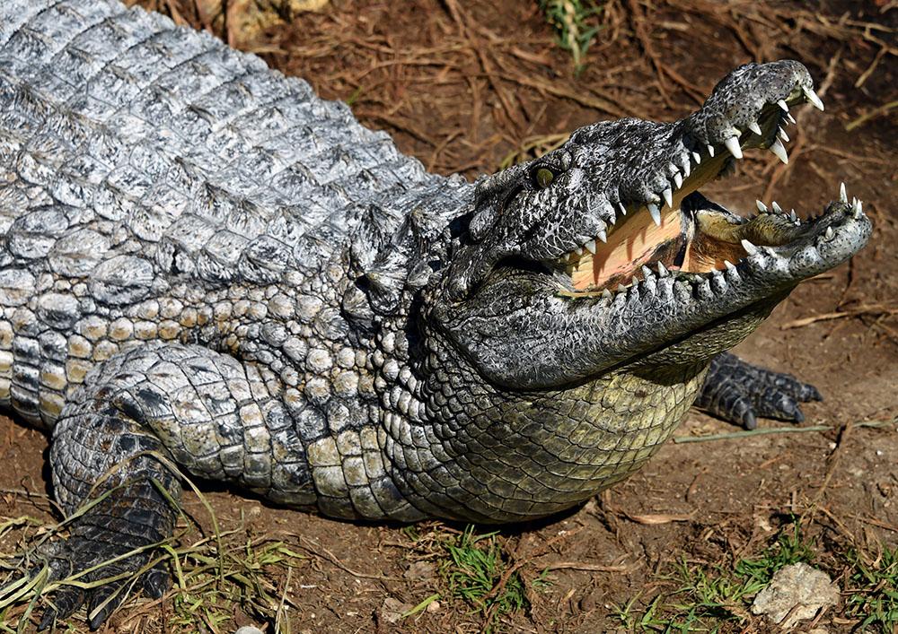 Après la mort d'un crocodile, Tunis ferme provisoirement son zoo