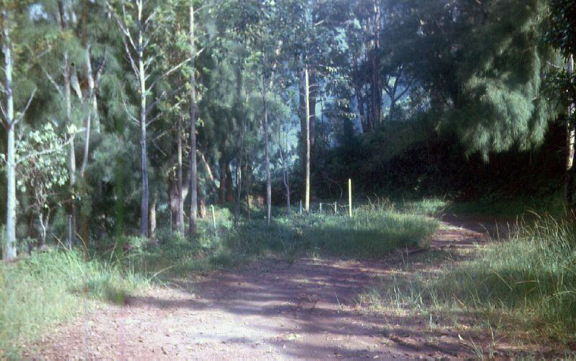 La piste d'accès au belvédère de Pirae en 1963. Photo Pierre Carabasse