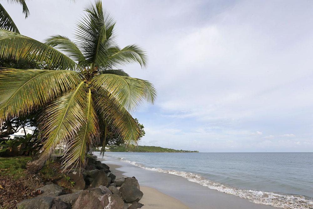 Martinique : un parc naturel marin créé d'ici fin mars