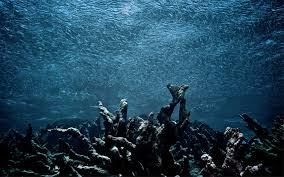 Les zones mortes dans les océans menacent de nombreux récifs coralliens