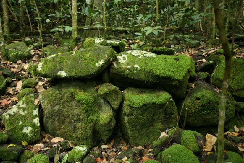 Les pierres ayant constitué des murailles homogènes ont de plus en plus tendance à se disjoindre à cause des racines des arbres.