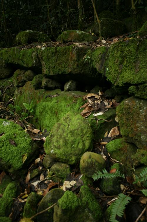 """Au centre de cette photo, une pierre ronde qui ne """"parle"""" pas beaucoup au visiteur ; il s'agit d'une tête de tiki très érodée."""