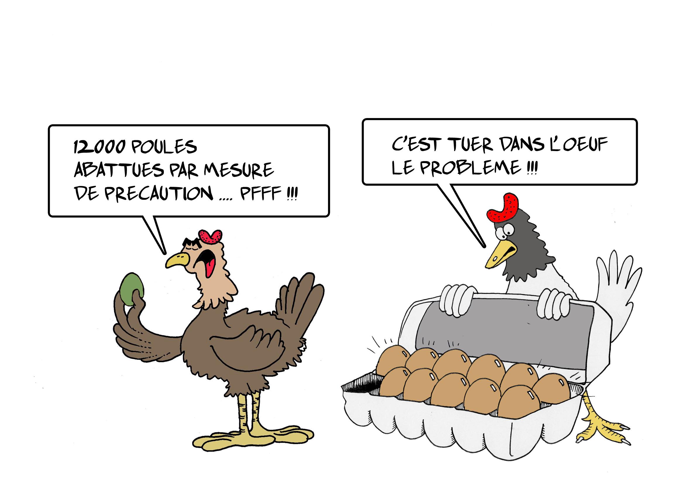 """"""" Salmonellose : les 12 000 poules abattues """" par Munoz"""