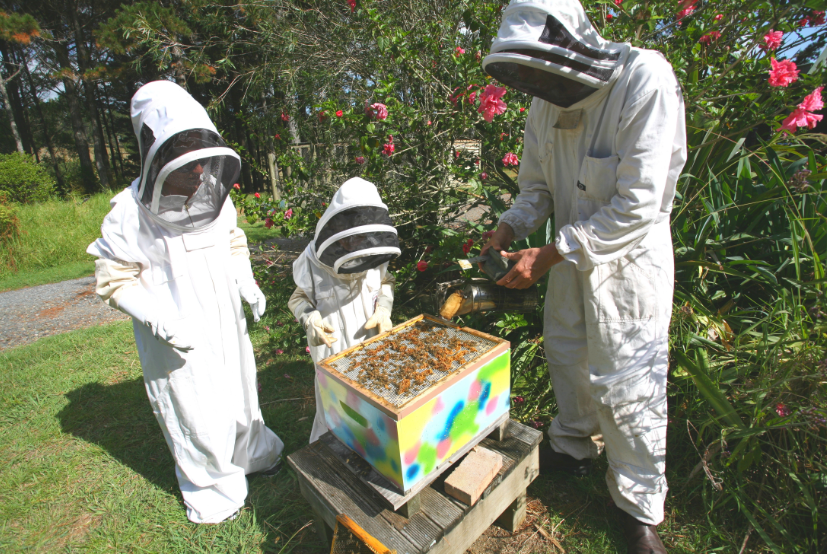 Frank (à droite) entame la leçon de choses par l'ouverture de la ruche