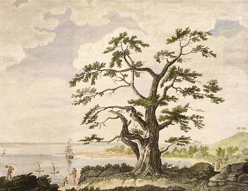 "Gravure de Sydney Parkinson ""View of Matavai Bay, Tahiti."" London. c. 1784."