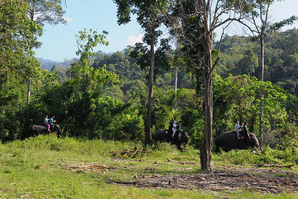 Environnement: 60.065 espèces d'arbres différentes dans le monde