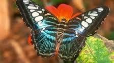 GB: un meurtrier de papillons échappe à la prison