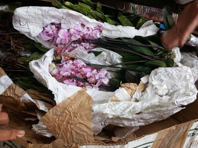 3500 plantes dont une grande majorité interdite à l'importation sur le territoire ont été saisies la semaine dernière à Tahiti-Faa'a.