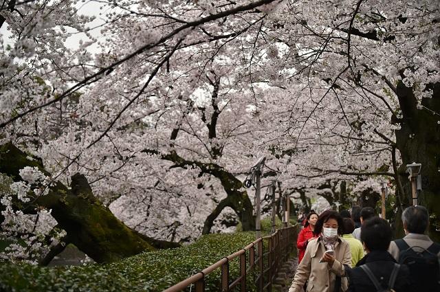 La Japan National Tourism Organization (JNTO, Organisation nationale du tourisme au Japon), a annoncé en début d'année que 24,04 millions de visiteurs s'étaient rendus au Japon en 2016.