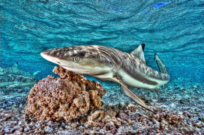 Requin, Photo Sylvain Girardot