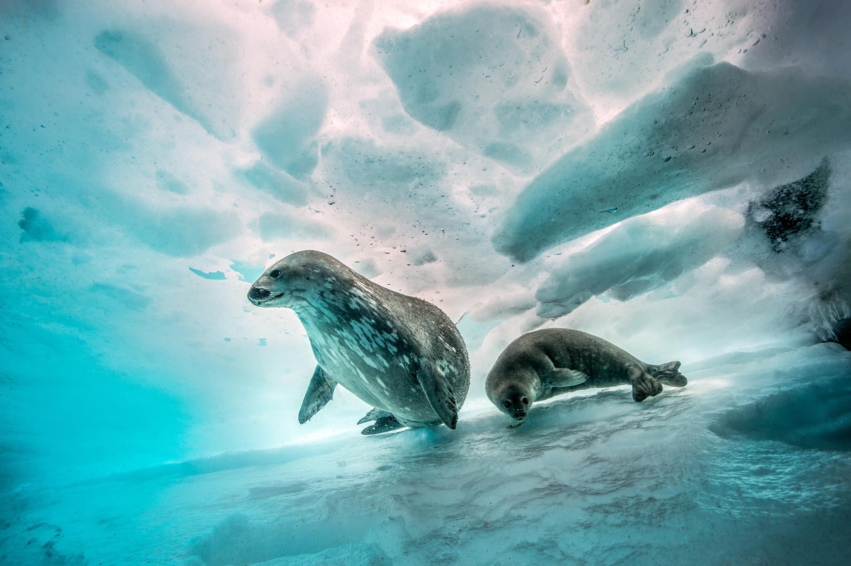 Plus jeune photographe à avoir reçu la palme d'or au Festival mondial de l'image sous-marine, il publie des portfolios dans les plus grands magazines.