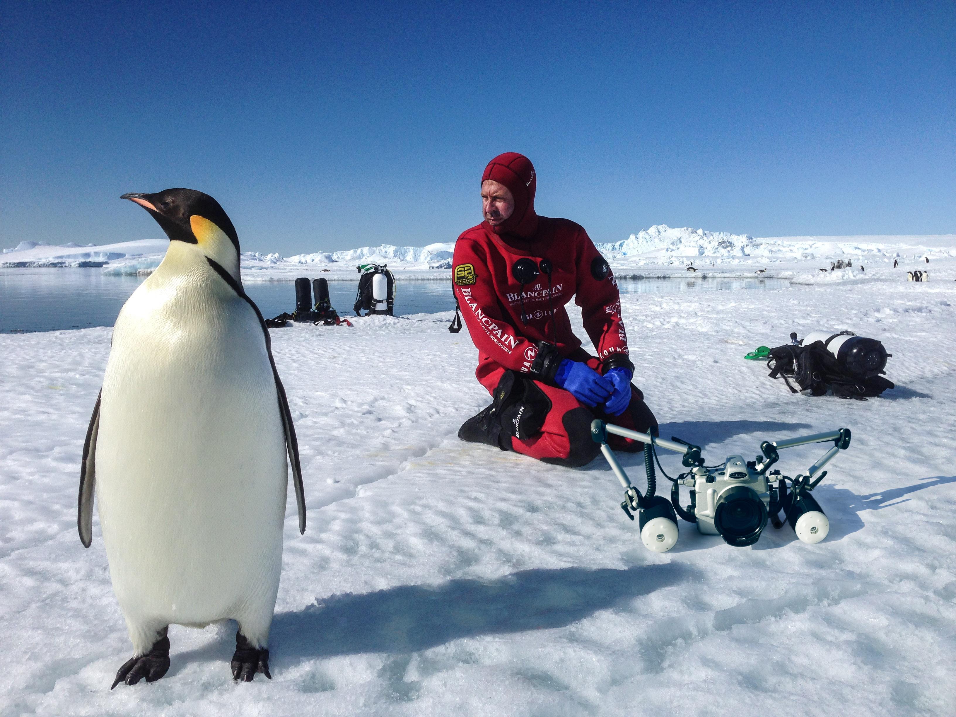 Laurent Ballesta se déplace ces dernières années entre l'Antarctique et la Polynésie pour différents projets d'exploration.