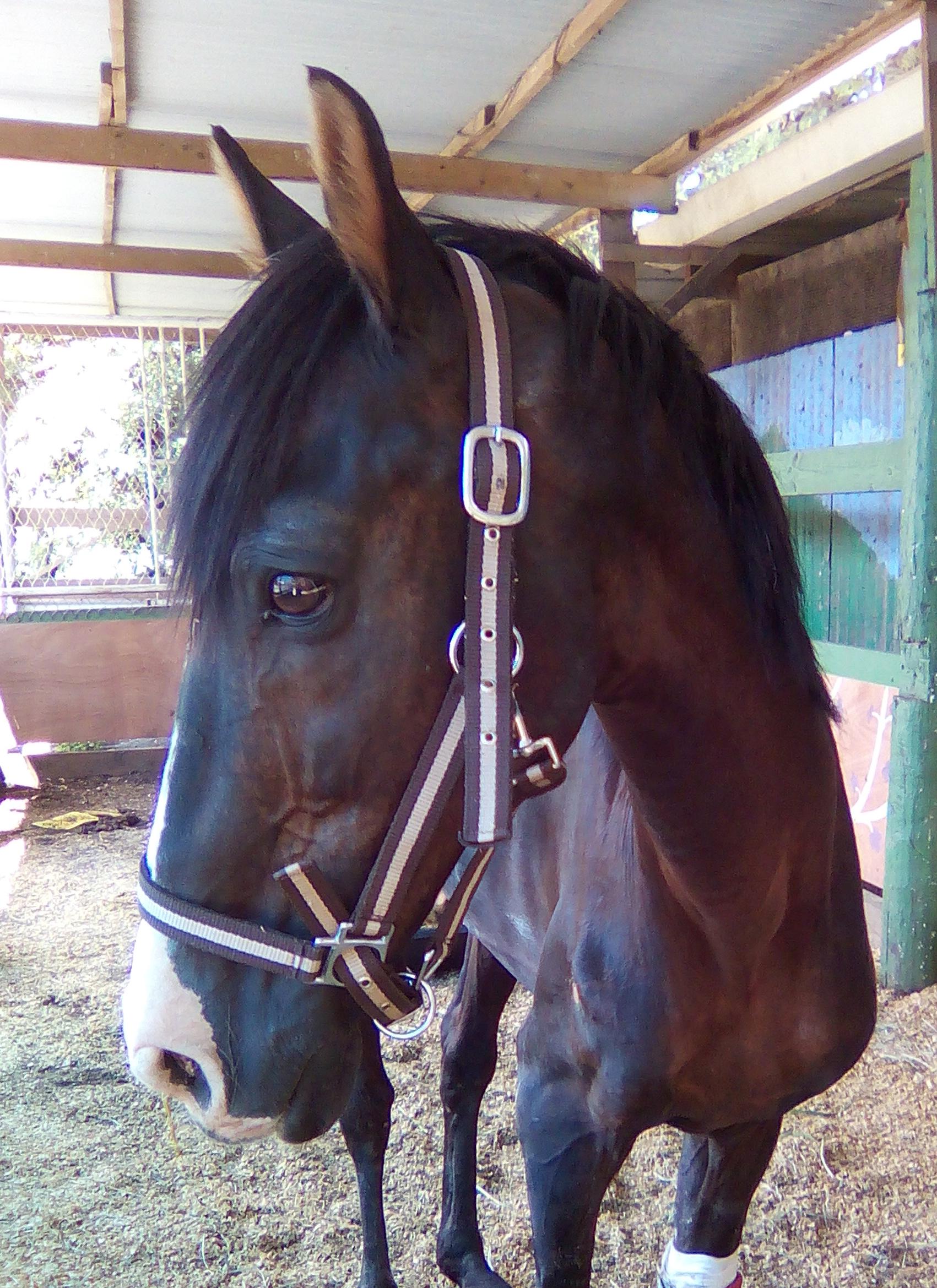 Le cheval Manatea est décédé ce week-end