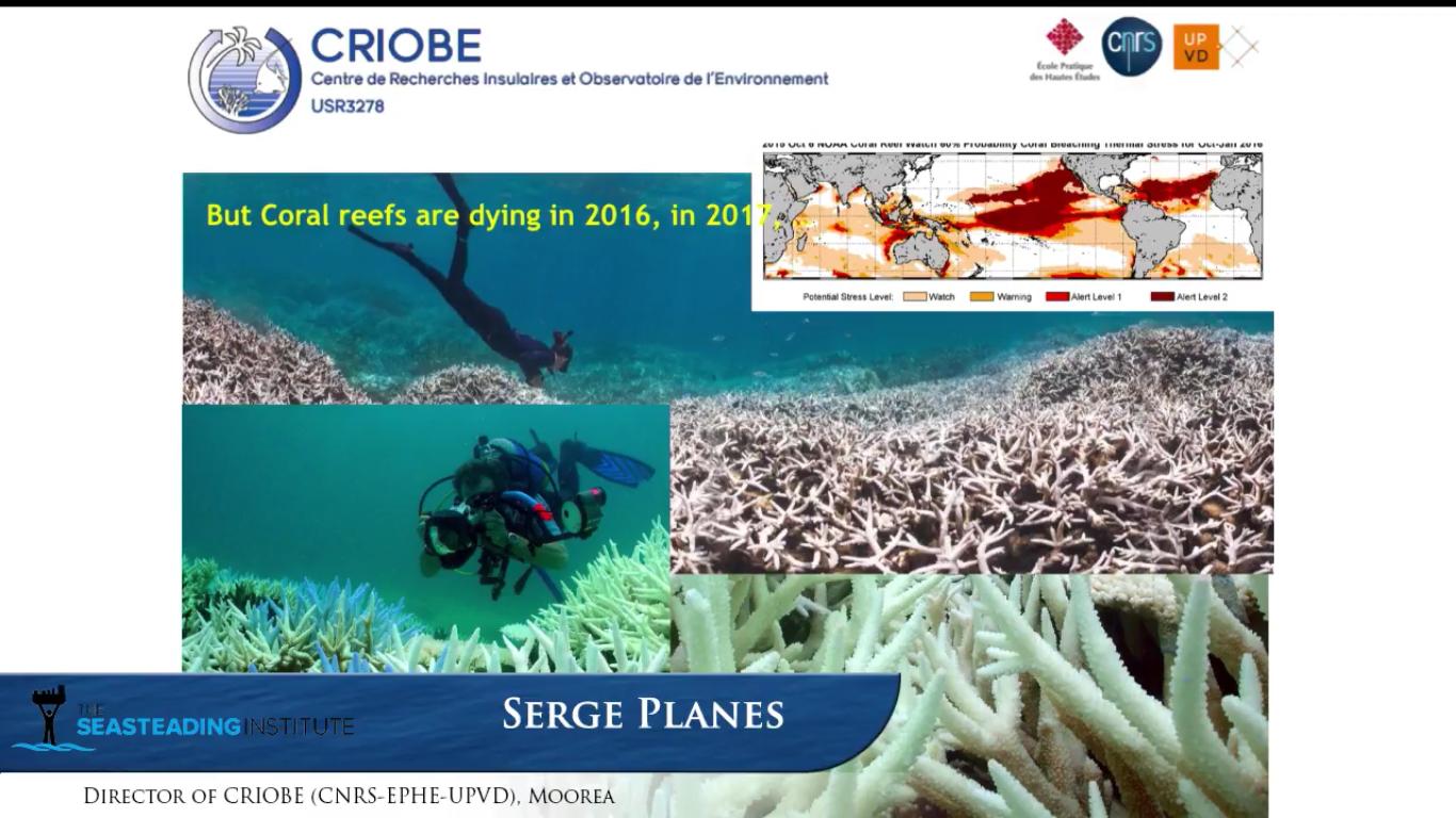 Serge Planes, directeur du Criobe, est alarmiste sur les conséquences du changement climatique sur nos coraux.