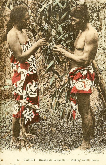 Mariage de la vanille, les fleurs devant être fécondées manuellement, en 1920. Carte colorisée, photo Bopp.