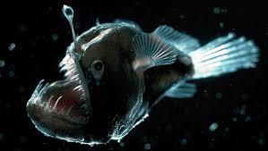 Australie: pêche fantastique dans les abysses