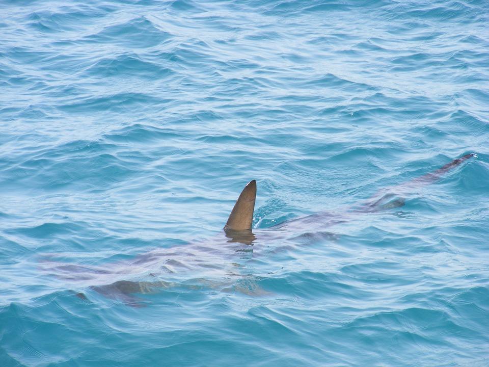 Hiva Oa : Un surfeur attaqué par un requin